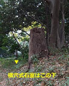 DSC05839.JPG