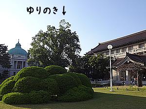 yurinoki-tohaku.jpg